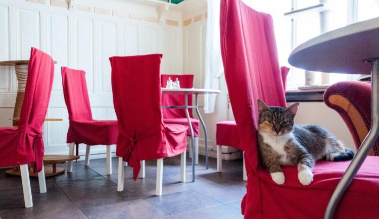 Praha má netradiční kavárnu. Ke kávě tu předou kočky