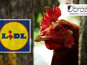 Lidl se po drsné reportáži České televize rozhodl skoncovat s prodejem vajec z klecových chovů.