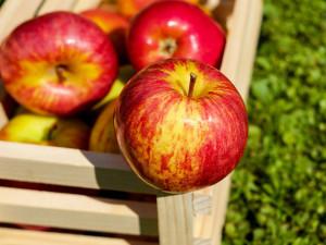 Jablka jsou nejdražší v historii, kilogram stojí přes 43 korun