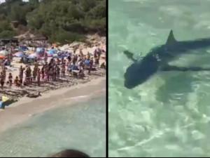 VIDEO: Žralok vyděsil turisty na pláži na Mallorce. Zmatené zvíře museli nechat utratit