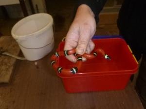 Po závěsu v kupé lezl had. Odchytit ho museli strážníci
