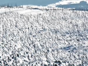 Ministerstvo chce po vládě 2,5 miliardy pro vlastníky kůrovcových lesů