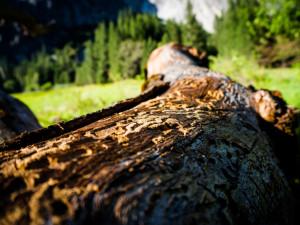 ČT: Policie ukončila vyšetřování případu Lesní správy Lány