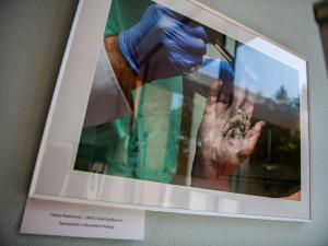 Průstřel žebra i oběšenec za ranního úsvitu, policie vystavuje fotky z místa činu.