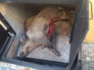 Těla mrtvých zvířat