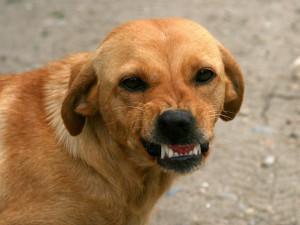 Pravidla pro chov psů se pravděpodobně znovu zpřísní