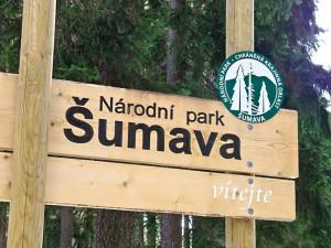 Národní park Šumava se kvůli ceně dřeva dostal do finančních potíží
