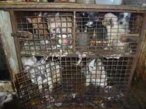 Množírny zvířat možná čeká zákaz, Sněmovna to podpořila
