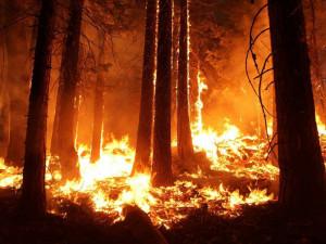 Česko pošle Austrálii na zmírnění dopadů ničivých požárů dva miliony korun