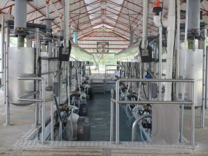 Do dvou třetin tendrů na mléko pro stát se firmy nepřihlásily
