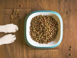 Plná miska granulí po celý den je chyba. Jaké je správné dávkování a jak často krmit psa?