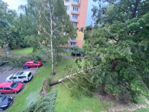 Část Česka zasáhly silné bouře, na Písecku usmrtil strom dva lidi