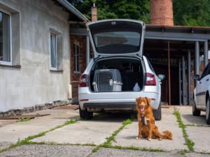 Jak bezpečně vozit psa v autě?